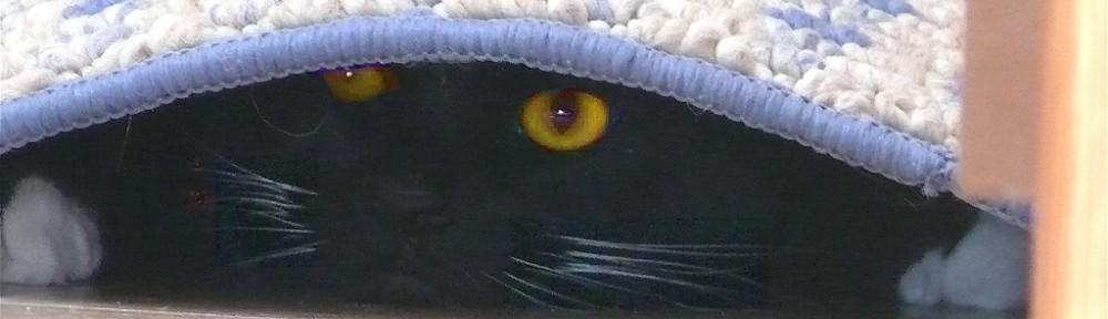 Katzenpension Chalkidis
