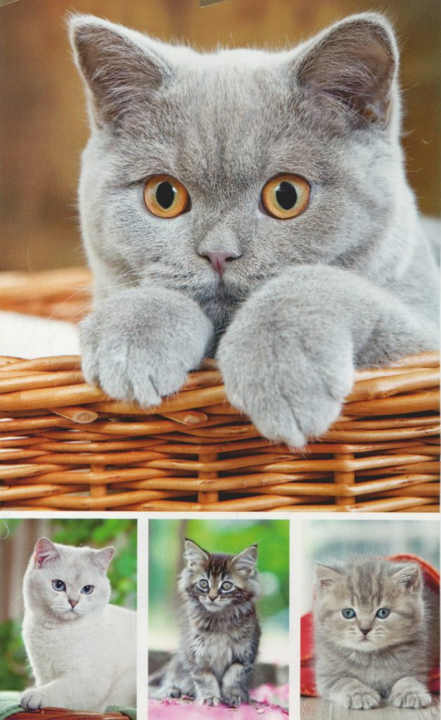Dieses Bild hat ein leeres Alt-Attribut. Der Dateiname ist Katzen-628x1024.jpeg